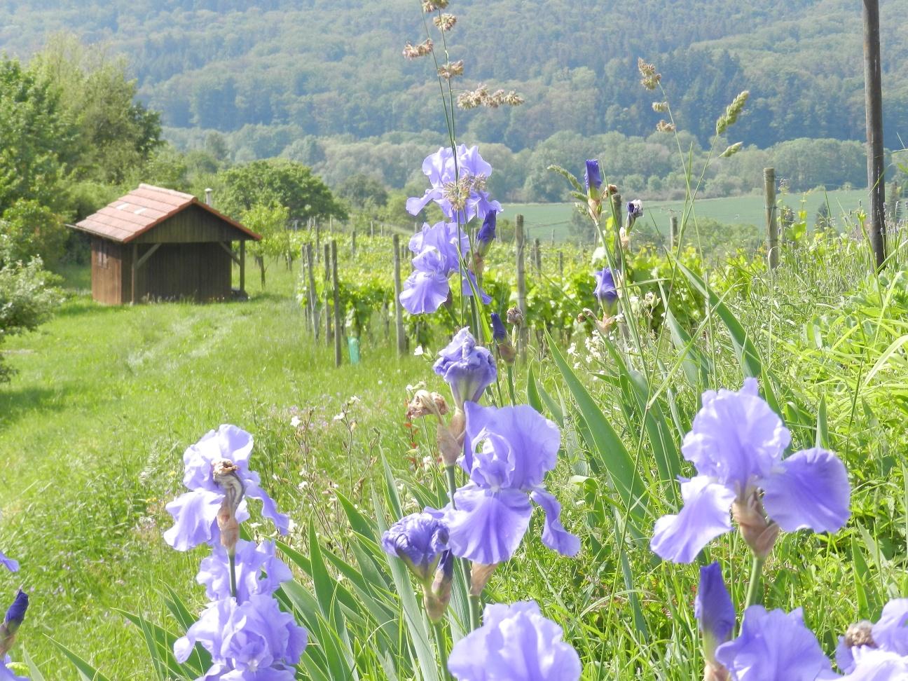 Flora im Naturpark Stromberg-Heuchelberg