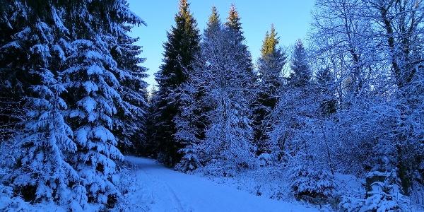 Winterwandern im Gebiet Scharspitze