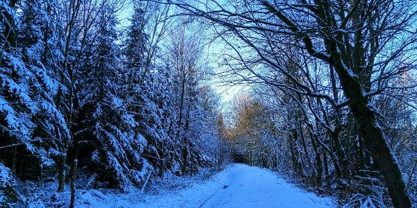 Winterwandern - Aschergraben