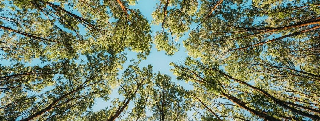 Baumkronen im Winter und Weierbachtal