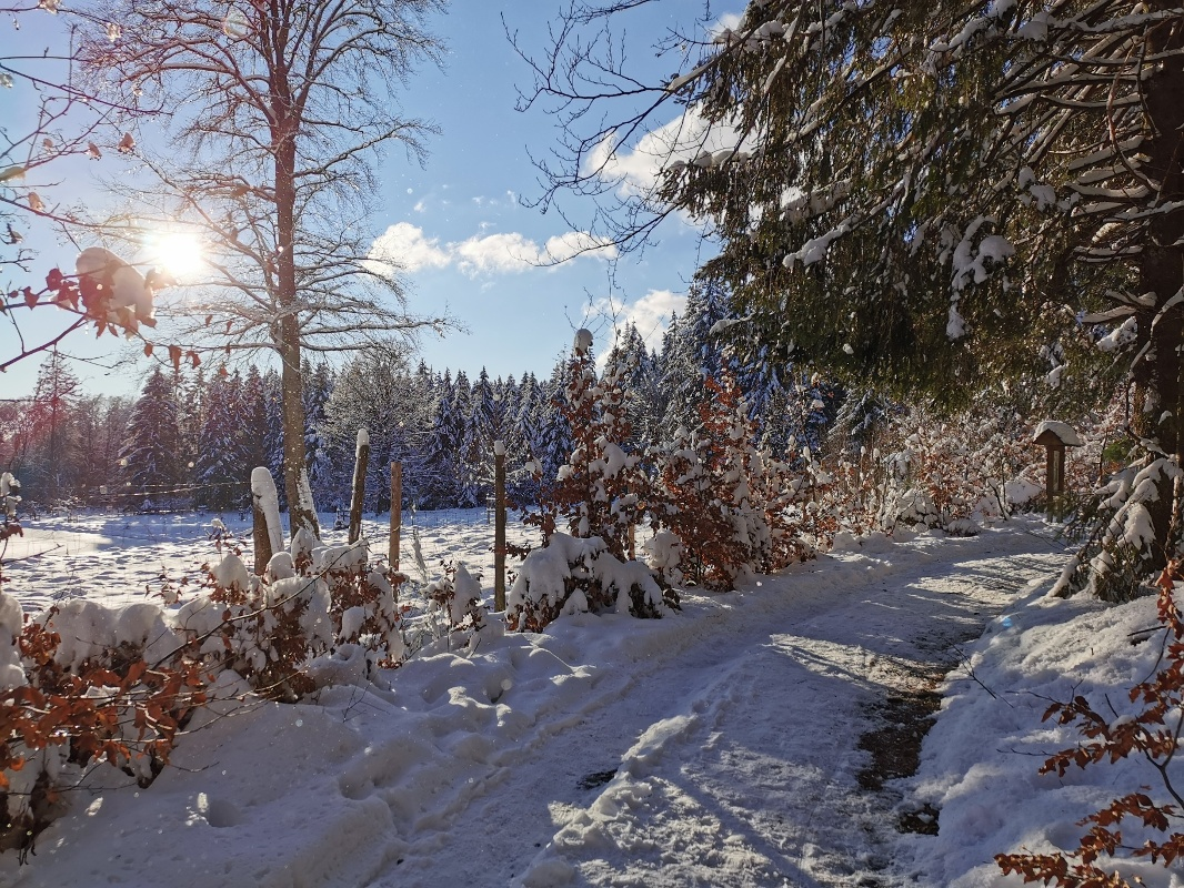 Winterlandschaft am Wildpark