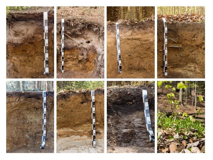 Foto Bodenprofile rund um den Gohrisch