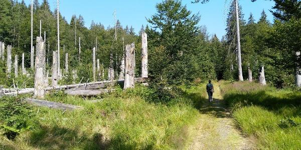 Gemütlicher Enstieg in die Wanderung - im Tal der Sagwasser.