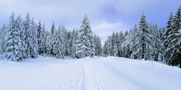 Winterwanderung rund um den Galgenteich