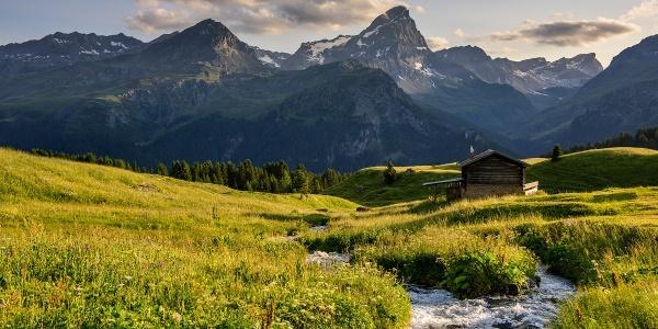 Auf der Alp Flix im Sommer