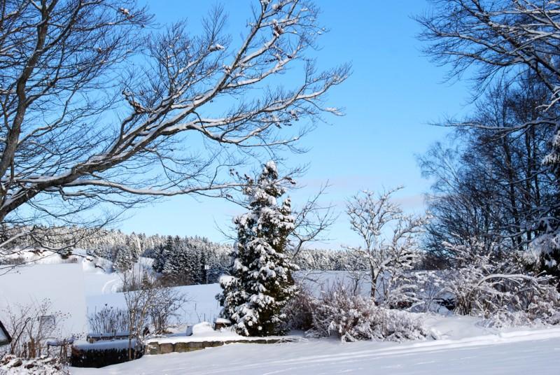 Winter - Dachsberg: Wintertour Nr. 7 Rüttewies-Scheibenrain