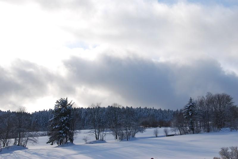Winter - Dachsberg: Wintertour Nr. 1 Wittenschwand-Wolfertsmatt