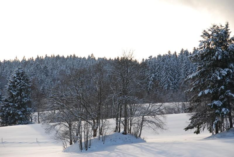 Winter - Dachsberg: Wintertour Nr. 2 Wittenschwand - Dietlisberg