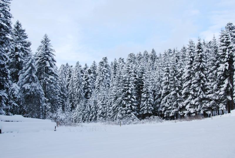 Winter - Dachsberg-Ibach: Wintertour Nr. 3 Rund um den Schwarzenhof