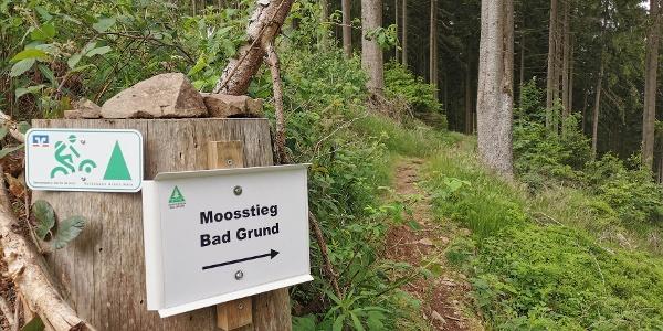 Der Moosstieg bei Bad Grund