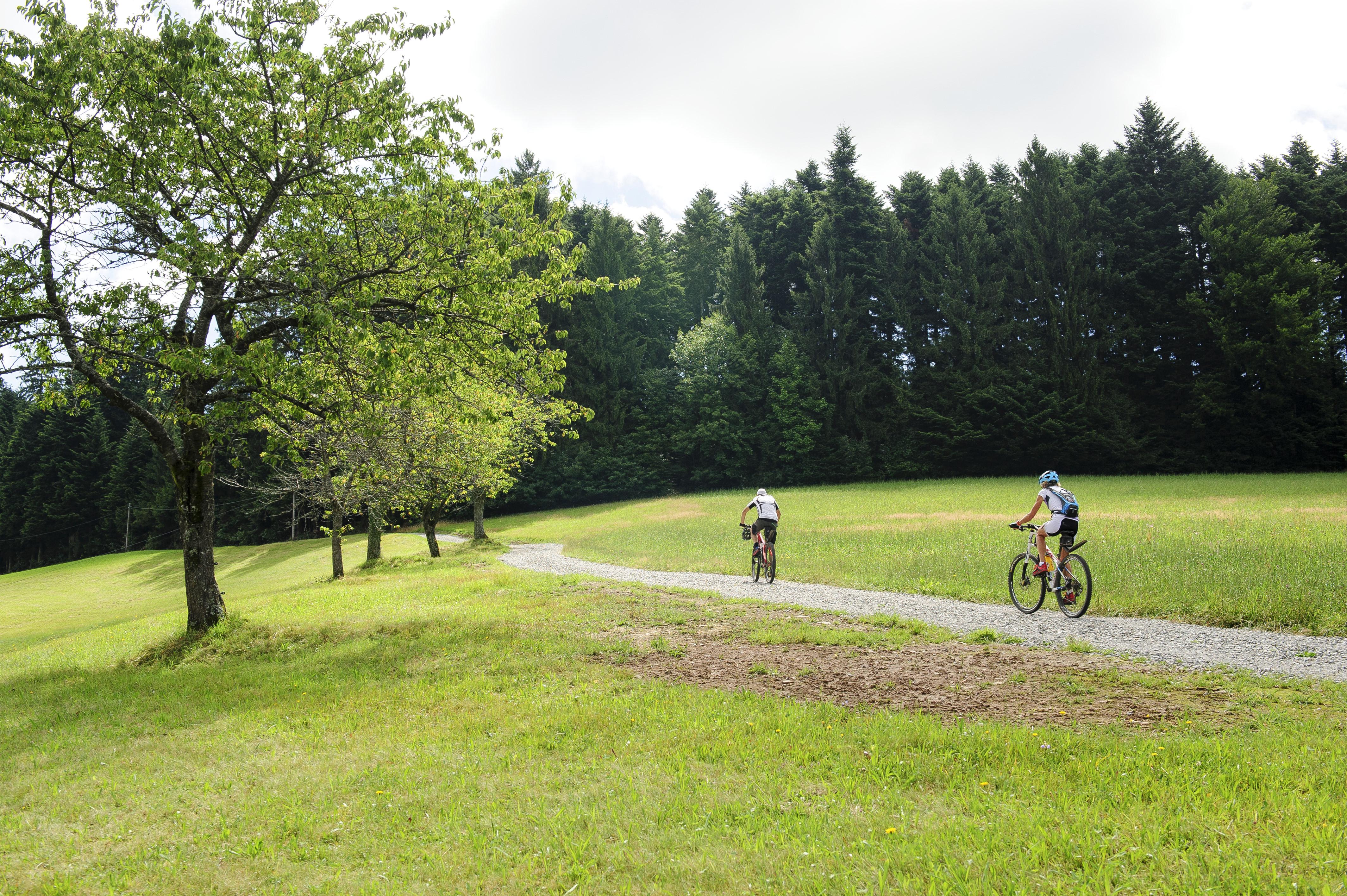 Mountainbiking im Mittleren Schwarzwald