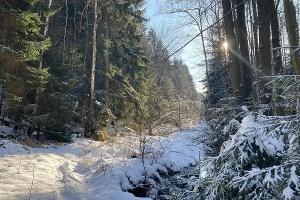 Foto Winterliches Bielatal
