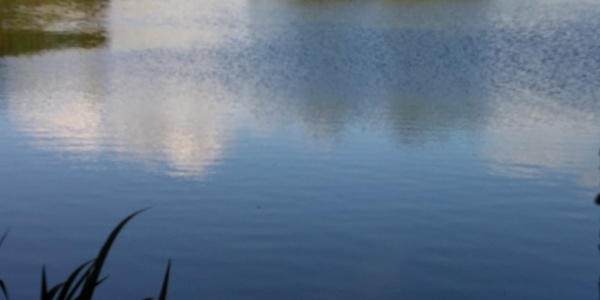 Thierbacher Teich