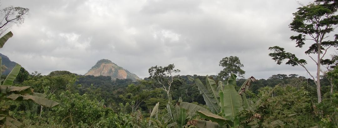 Jungle near Oyala, Equatorial Guinea