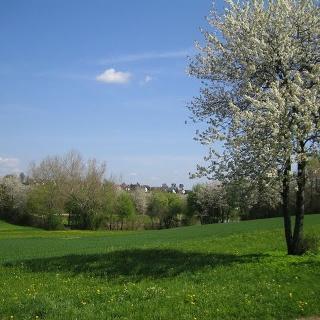 Kirschblüte am Sandbühlsee