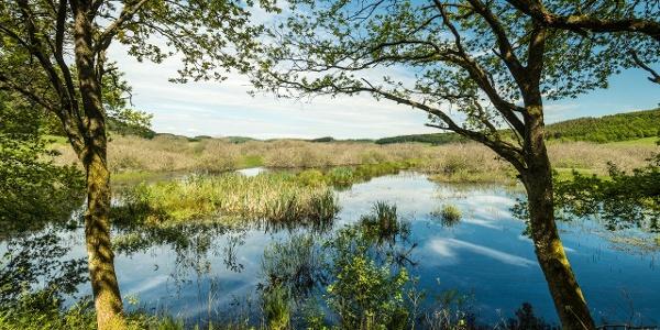 Naturschutzgebiet Mürmes