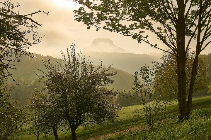 Foto Blick zum Lilienstein Thürmsdorf