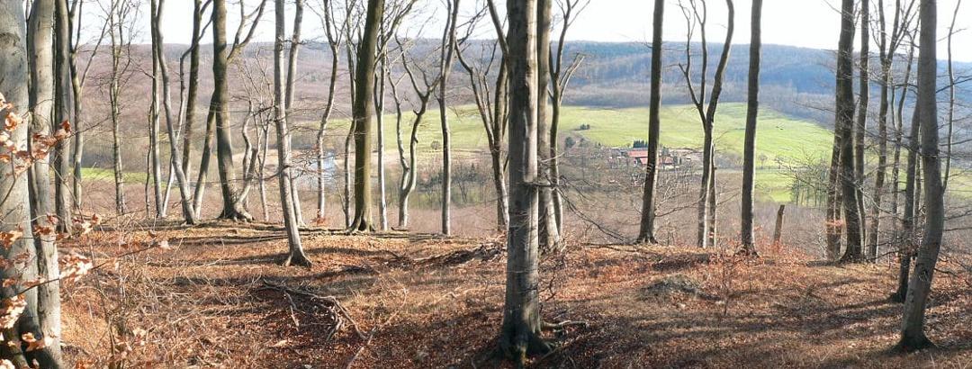 Blick durch den Buchen-Hochwald auf das Reitlingstal