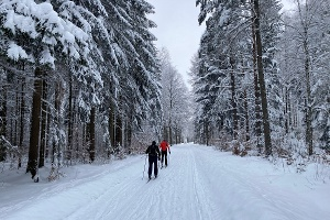 Foto Langläufer im Winterwald kurz vor dem Eulenthor