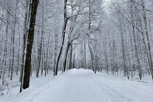 Foto Winterwald am Schneeberger Kreuz