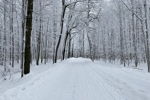 Foto Winterwald kurz vor dem Schneeberger Kreuz