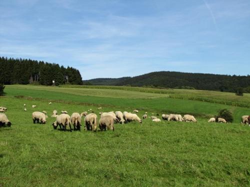 Zugangsweg Sauerland-Höhenflug: Von Valbert zum Sauerland-Höhenflug