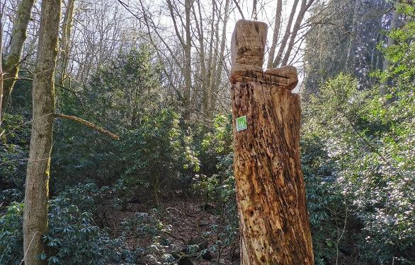 Wegemarkierung Sauerland-Waldroute