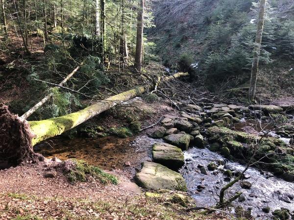 umgestürzte Bäume auf den Premiumwegen