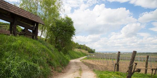 Alte Weinpresse bei der Eichberger Kellergasse Traismauer