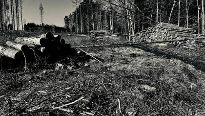 Unser Wald ... es ist fünf vor zwölf