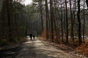 Foto Langenhennersdorf Weg zum Labyrinth