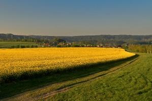Foto Zwischen Thürmsdorf und Weißig