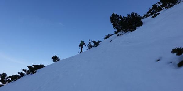In den Latschen oberhalb der Brunnsteinhütte