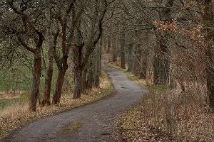 Foto Wanderweg bei Stolpen