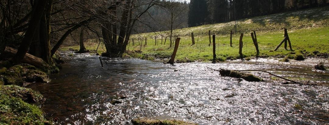 Ilme im Naturpark Solling-Vogler entlang der L548 nahe der Abzweigung Richtung Abbecke