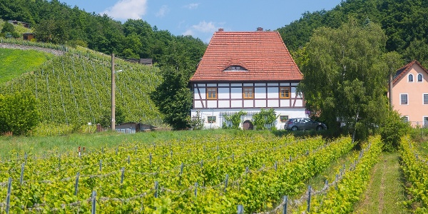 Weinberg am Talkenberger Hof