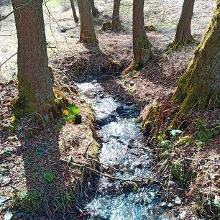 Der Laßbach in der Frühlingssonne