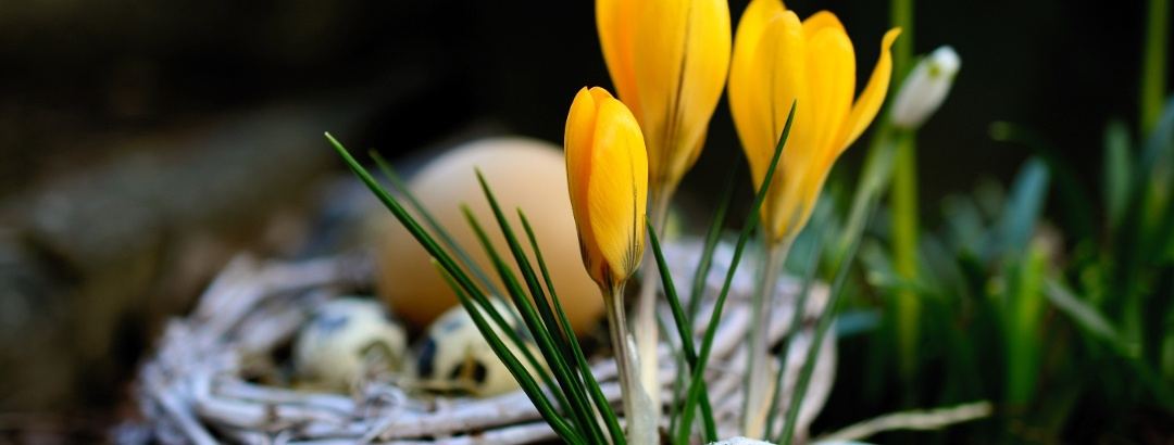 Osterzeit  und Frühlingserwachen