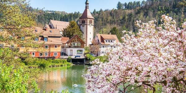 Stadtsee Bad Liebenzell