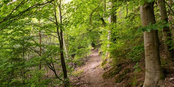 Auf den Spuren der Wölfe - tolle Waldpfade in Hohenwart
