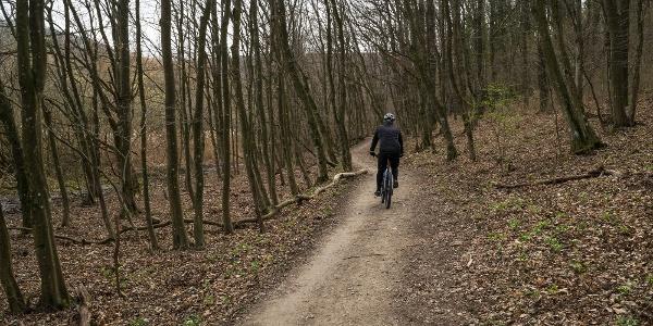 Az útvonal nagy részén kényelmes talajon futunk