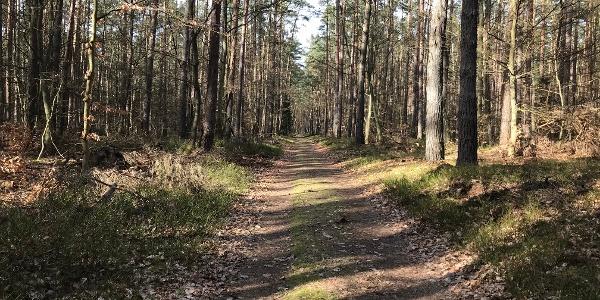 Waldweg im Barther Stadtforst