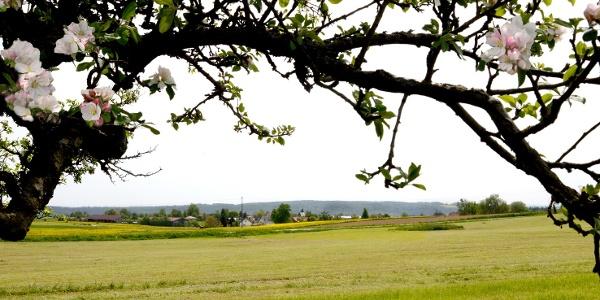 Ausblick vom Landgasthof Löwen in Schönbronn