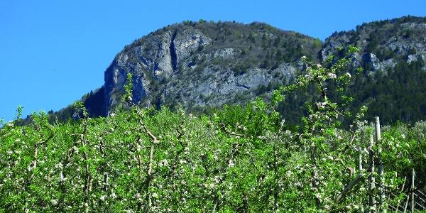 Frutteti alla base del Monte Calisio