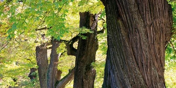 Während der Abfahrt kommt man am Troiana-Becken vorbei, das von Buchen- und Kastanienwäldern, sowie von Nadelbäumen umgeben ist.