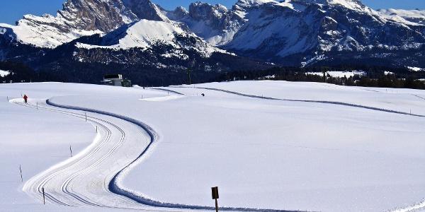 Die Loipe Wolfsbühel führt von Ritsch Schwaige durch die wunderbare Winterlandschaft der Seiser Alm.