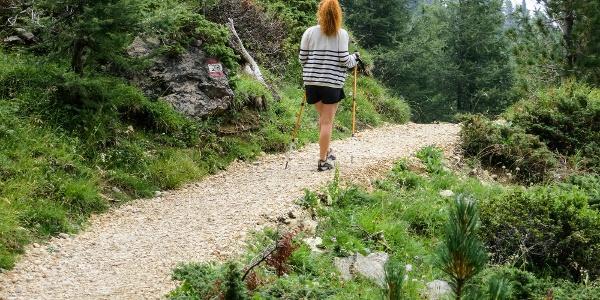 Durch einen zauberhaften Wald auf Weg Nr. 23 zur Mayrlalm in Obereggen.