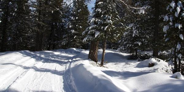 Auf dem Winterwanderweg in Obereggen die Rodelbahn entlang zur Epircher Laner Alm.