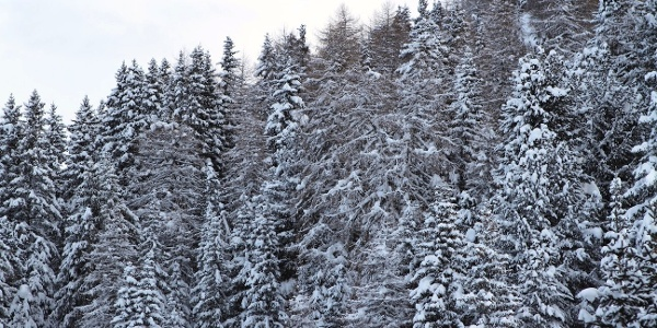 Zur Inneren Wumblsalm durch frisch verschneiten Winterwald.