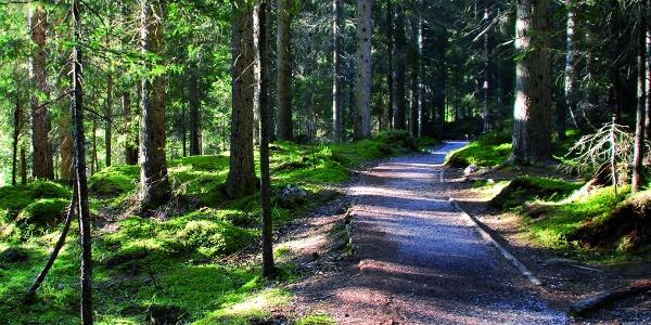 Die Wanderung ist reich an Naturlandschaft.